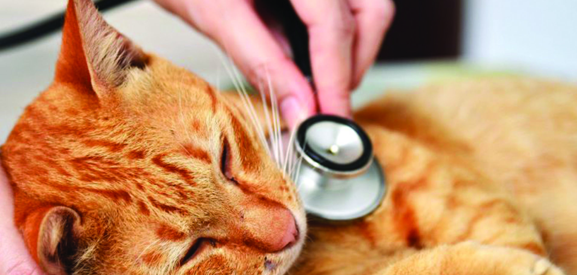 10 signs of illness in cats