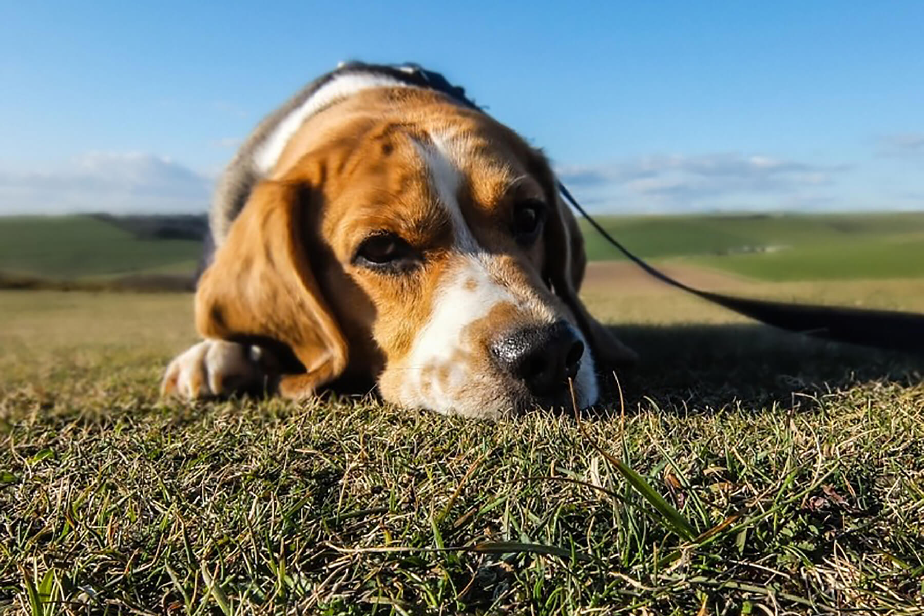 The Truth Behind Cheap Veterinary Fees